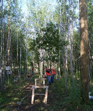 Technicians collecting tree measurements in study forest