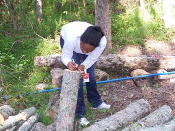 Measuring logs