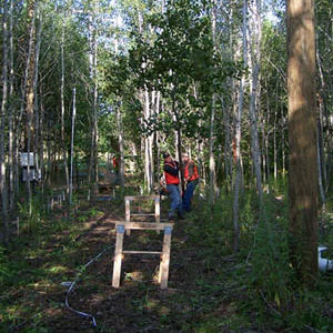 Collecting tree data in the forest