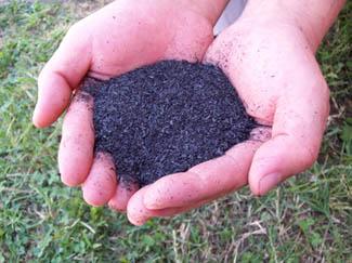Technichian holding a biochar sample